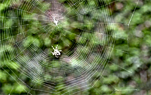 a spider making his web